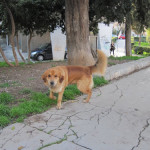 【写真】写真を撮ったら怒り始めたプライバシーに厳しい犬。よく見ると顔が怒っている。