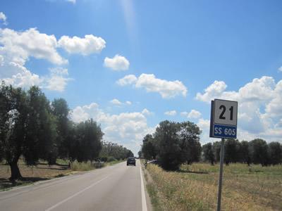 【写真】道路沿いに延々とオリーブ畑が続く。