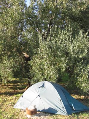 【写真】オリーブ畑は野宿がしやすい。