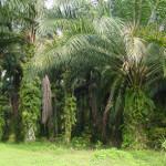 【写真】ジャングルへ誘導して行くグーグルマップ(写真はイメージ)