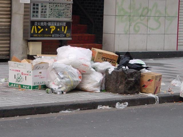 【写真】ゴミをあさり食を得る。