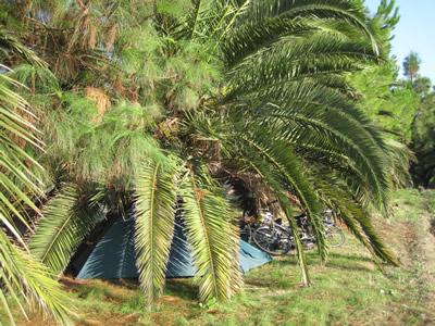 緑のテントは木々にまみれて目立たない。